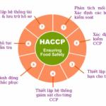 Tiêu chuẩn HACCP là gì ? Đối tượng áp dụng tiêu chuẩn HACCP